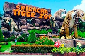 Ticket to Sri Racha Tiger Zoo with Indian Lunch
